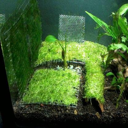 vĩ lưới inox trồng rêu thủy sinh