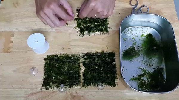vĩ trồng rêu bằng lưới inox