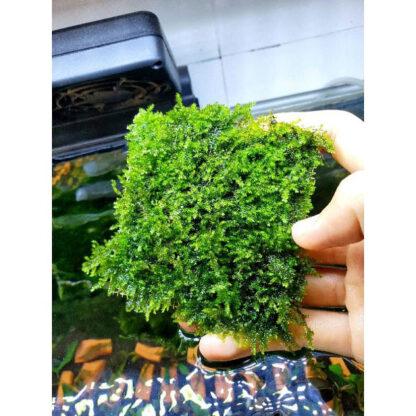 vĩ trồng rêu inox